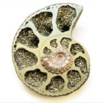 Ammonite, Pyritized