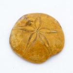 Fossil, Sea Urchin